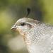 CC Challenge Wk 20 'Birds'