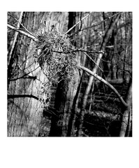 DIAP WOOD 008 (Dominiq db) Tags: diapo séries wood trees arbres forêt nature