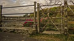 no access ... (HHH Honey) Tags: sonya7rii tokina2035mmlens landscape fence fences fencefriday clouds devon minimoonxv burrator dam gate rhododendron pink dartmoor