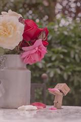 Fallen. (sdupimages) Tags: garden jardins roses softlighting soft poetry stilllife dof bokeh danbo