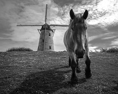 Horse on the hill - Y in B&W (Drummerdelight) Tags: horse damme blackwhite