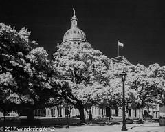 TexasCapitolbw_infrared-673 (wanderingYew2 (thanks for 3M+ views!)) Tags: 120 austin austintx austintexas capitol fuji6x9 fujigw690 r72filter texasstatecapitol blackandwhite film filmscan infrared infraredfilm mediumformat