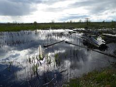 Mud Flats (misiekmintus) Tags: vancouver bc britishcolumbia canada birds birding birdwatching aves oiseaux ptaki vogel nature natur naturaleza mud mudflats tide ocean pacificnorthwest ionaisland