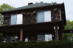 Bird House (David Stebbing) Tags: color wickford flickr street