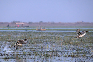 Marvels of Mangalajodi Marshland
