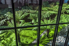 Behind Glass (Stefan Schafer) Tags: fern nature places plant sanfrancisco sf museum deyoung goldengatepark california people silhouette window green shadow nikon d80