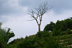 Days Gone (Battle Royale1) Tags: japan ehima uwajima yusumizugaura terraced fields