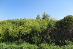 Rasa dels Vinots, Vilafranca del Penedès (esta_ahi) Tags: vilafrancadelpenedès herbicida veneno muerte rasadelsvinots camídesantpau penedès barcelona spain españa