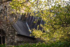 (Mark Greening) Tags: horfieldparishchurch bristol horfield tree church buding england unitedkingdom gb