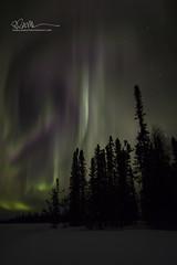 _64A1578 (Ed Boudreau) Tags: alaska northernlights auroraborealis nightphotography nightsky stars aurora winter winterscene winterscape landscape alaskalandscape landscapephotography auroratrapperscreek petersvillerd auroracolors