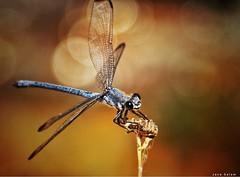 #macro #photography #nature_photography #nature #insects #beauty #closeshot #photo#spring (salam.jana) Tags: macro photography naturephotography nature insects beauty closeshot photo