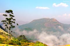 #eravikulam #national #park (Prasad.T.R :-)) Tags: munnar eravikulam national park nature mount tree prasad photography prasadramachandranphotograpy