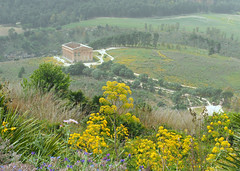 Segesta, Sicily (Grazerin/Dorli B.) Tags: segesta greek greektemple ancient history historical wildflowers sandstorm outdoors elements