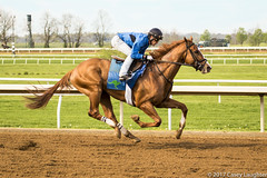Four Off the Floor (Casey Laughter Media) Tags: horse horseracing horses thoroughbred racing racetrack race training gallop lexington kentucky keeneland train