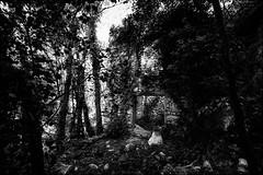 ....Et la lumière fut...  ...And there was light... (vedebe) Tags: noiretblanc netb nb bw monochrome abandonné forêt lumière
