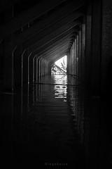 Bajo el muelle (Diego Serra) Tags: byn rio river muelle agua bridge monocromo