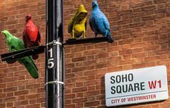 Soho Square, London (that Geoff...) Tags: london greatbritain gb unitedkingdom uk tourism england canong7x sohosquare birds colours w1 city westminster