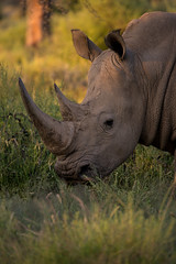 Namibia 2017 (Marianne Zumbrunn) Tags: namibia2017 namibia 2017 gocheganas sun light evening color colour nikon d610 nikond610 nikon300mmf4pf pf safari rhino nashorn