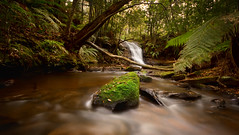 Waves (EmeraldImaging) Tags: bowral belmorefalls southernhighlands sydney nsw australia river moss trees water rainforest flow ferns sunrise