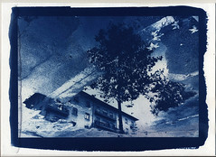 Cementree (cyanotype print) (guido.masi) Tags: aprile tree cyanotype cianotipo blue stampa fineart print firenze flore httpswwwinstagramcomofffirenze florence
