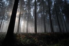 Que la force soit avec toi... (Thomas Vanderheyden) Tags: arbre brouillard brume colors couleur forest foret france fujifilm landscape light lumiere nature paysage picardie samyang12mm thomasvanderheyden tree xt1