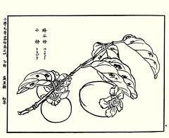 Japanese persimmon (Japanese Flower and Bird Art) Tags: flower persimmon diospyros kaki japonica ebenaceae shoseki kose nihonga woodblock picture book japan japanese art readercollection