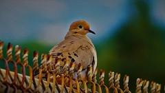 Bird (Mohammed_Moustafa) Tags: bird wildbirds birds net blurredbackground standing sky freshness