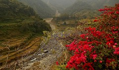 Rund um Pokhara,  Am Kloster im Phewa Tal, 16082/8357 (roba66) Tags: reisen travel explore voyages roba66 visit urlaub nepal asien asia südasien pokhara landschaft landscape paisaje nature natur naturalezza kloster monastary abbey