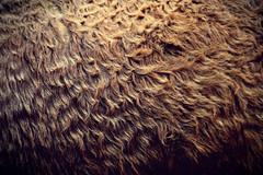 crine (Rino Alessandrini) Tags: crine pelo movimento verso animale asino hairpin hair movement towards donkey animal fur backgrounds closeup pattern brown fluffy softness fleececoat textured abstract animalhair textile material macro nature