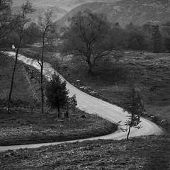 Tarn Hows Road (ss9679) Tags: 120 hasselblad delta delta100 landscape uk mediumformat 6x6 500cm ilford hc110 kodak epson4180 150mm britishcountryside mittelformat sonnar square zeiss analog film blackandwhite f4 lakedistrict tarnhows road no sky telephoto trees filmdev:recipe=11379 ilforddelta100 kodakhc110 film:brand=ilford film:name=ilforddelta100 film:iso=100 developer:brand=kodak developer:name=kodakhc110