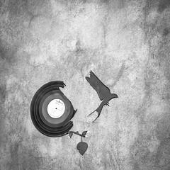 The power of music (Alexandre DAGAN) Tags: petitefrance strasbourg alsace france voyage elsass travel noir blanc black white noiretblanc noirblanc blacknwhite blackandwhite blackwhite panasoniclx100 panasonic lx100 dmclx100 carré carre square squared cuadro music musique oiseau bird art balade walk