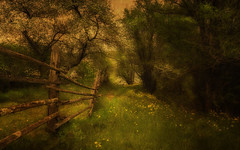 The Way Home (Carolyn Little) Tags: novascotia textures spring fence flowers landscape grass trees forest ie netartii magicunicornverybest