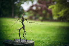 Dancing Root (Jen MacNeill) Tags: bowtruckle groot root dancing weird plant art wood man dryad creature nature