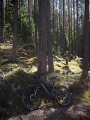 Day Biking 3 (pjen) Tags: santacruz mtb finland nature forest spring carbon fullsuspension nordic boreal maastopyörä pike 275 650b kashima trail bicycle bike 2x11 outdoor vehicle 5010 5010cc maastopyöräily