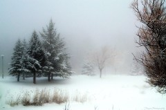 The enticing days of March's retreat (Captions by Nica... (Fieger Photography)) Tags: march winter weather mist misty forest fog foggy outdoor cold snow serene trees tree parc quebec canada