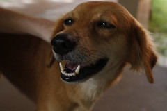 A Cachorra Mais Fofa do Brasil 2 (rudyeri) Tags: cachorro fofo