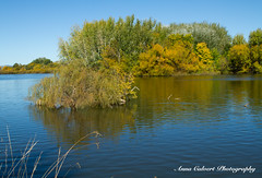 Autumn colours on Molonglo River (Anna Calvert Photography) Tags: annacalvertphotography landscapes nature outdoors plants molongloriver trees autumn water river canberra australia
