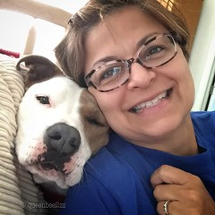 The latest in luxe comforts- the Zoe pillow. (queenbee2zz) Tags: me rescued pitbullmix zoe
