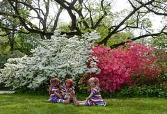 Den Tag genießen ... (Kindergartenkinder) Tags: grugapark essen kindergartenkinder blüte baum garten blume park frühling annette himstedt dolls margie annemoni sanrike azalee kind