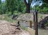 cougarox-20170508-1321-0983 (cougarox.) Tags: albuquerque brianc dietzfarms fauna landscape mdrokkorx357035 newmexico sony a6000 acequia bird cougarox duck geophotocacher vintageglass water