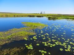 IMG_0270 (rpealit) Tags: scenery wildlife nature sweetwater wetlands park