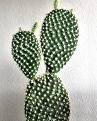 Piccole antenne crescono #succulent  #piantagrassa #cactus #cactaceae #Green #ilovecactus #giardinopensile #giardinaggio #buonadomenica (losting75) Tags: instagramapp square squareformat iphoneography uploaded:by=instagram cactus cactacee piantegrasse green ilovecactus giardinopensile giardinaggio polliceverde natura antenne
