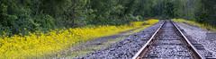 rails (Lanamcara) Tags: pregamewinner storybookchallengewinner rails tracks traintracks yourockwinner yourockbannerwinner challengefactorywinner gamewinner
