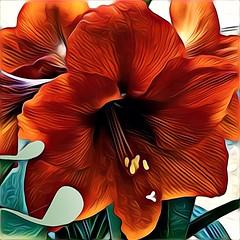 Amaryllis (GeminEye27) Tags: amaryllis paintbrush pixelbenderoilpaint topazclean photopainting flower crazygeniuses
