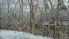 creek 02 4r (CoriJae) Tags: minnehaha creek winter snow trees bank minneapolis minnesota hopkins creekwood