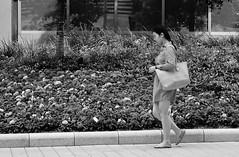 Man's Shirt (burnt dirt) Tags: houston texas downtown city town mainstreet street sidewalk corner crosswalk streetphotography fujifilm xt1 bw blackandwhite girl man woman people person couple pair group crowd walking talking standing looking boots heels stilettos sandals model photographer camera lens dress skirt shorts glasses sunglasses purse bag phone cellphone pose longhair shorthair ponytail kneehigh blonde brunette headphones cap hat asian friends bike bicycle prom lovers