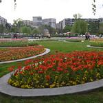 Blumen, South Park, Sofia (126LIEBE_6696) thumbnail