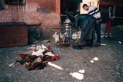 A Certain Fate (toletoletole (www.levold.de/photosphere)) Tags: fujixt2 marokko marrakesch xf18mmf2 market kasbah bazaar morocco porträt street portrait people chicken hühner