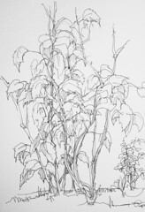 2013-05-10 20.03.41 (Gasheh) Tags: art painting drawing sketch nature grapes vineyard line pen gasheh 2014