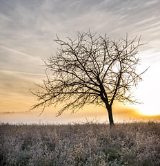 Albero solitario all'Alba (kaannc7) Tags: alba albero asciutto aurora autunno avena backlit brillante campo cannuccia cielo crepuscolo erba isolato luce marrone nube nuvoloso paesaggio prato quercia raggio sagoma scuro secco selvatici sole solitudine solo spettrale statodanimo suggestivo sunbeam tempestoso tempo uno volubile italy